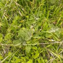 weeds tooleen Land Management Plans